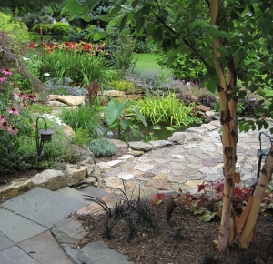 Patio Pond with River Birch