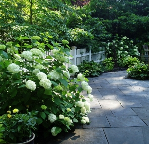 Patio with Hydrangeas