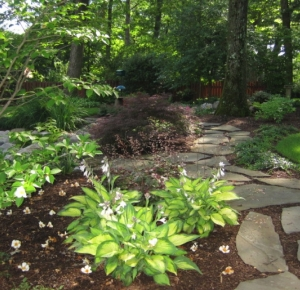 Stepping Stone Path and Hosta