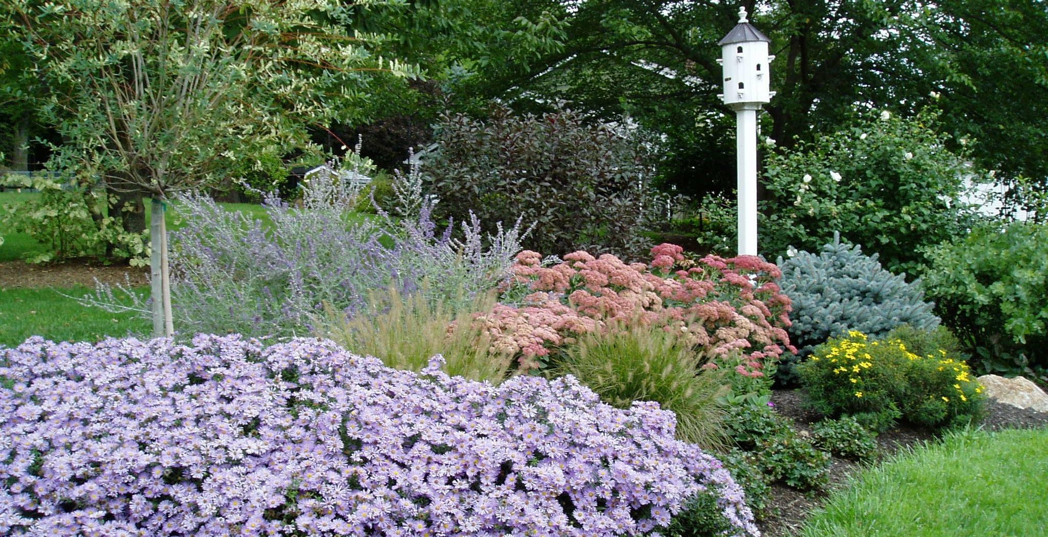 Flower Power - 10 fáciles plantas que pueden tomar el calor y florecer todos los jardines de verano / Armstrong Garden