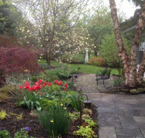 tulips & Magnolia
