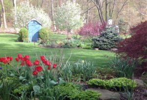 tulips & crabapples