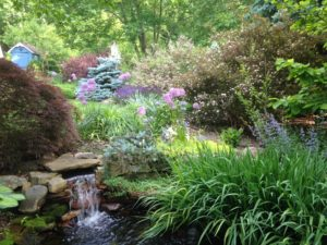 Bartley pond and garden 5-31-16